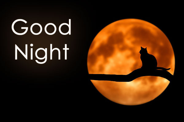 Good Night image with Cat sitting on tree and moon at background