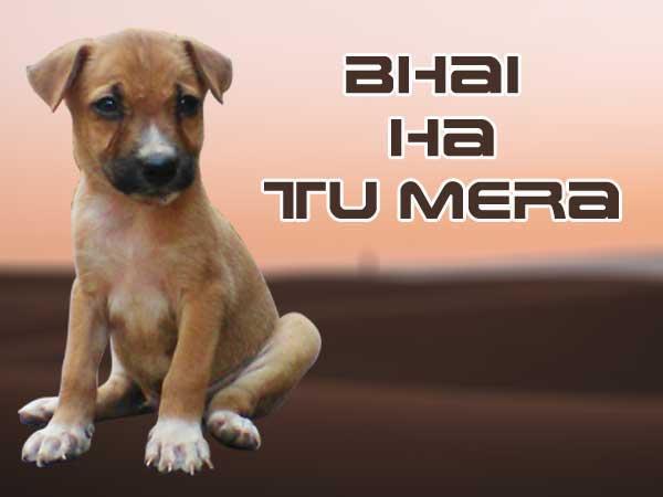 funny-whatsapp-alone-dp-image, companion dog