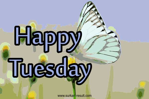 happy-tuesday-butterfly-images