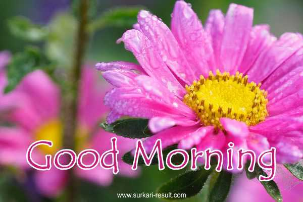 Good-morning-pink-image