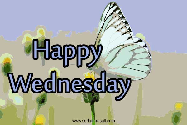 happy-Wednesday-butterfly-images