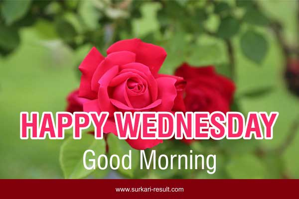 happy-Wednesday-images-rose