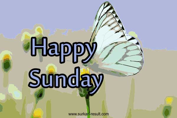 happy-sunday-butterfly-images