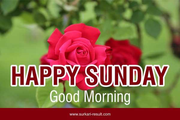 happy-sunday-images-rose