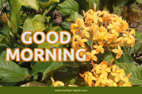 good-morning-image-orange