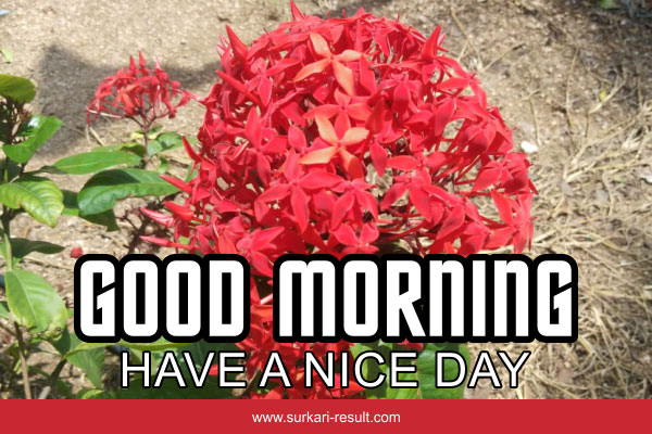 good-morning-imgs-have-nice-day