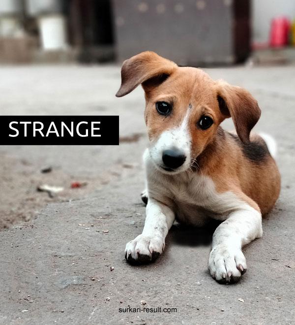 funny-dog-dp