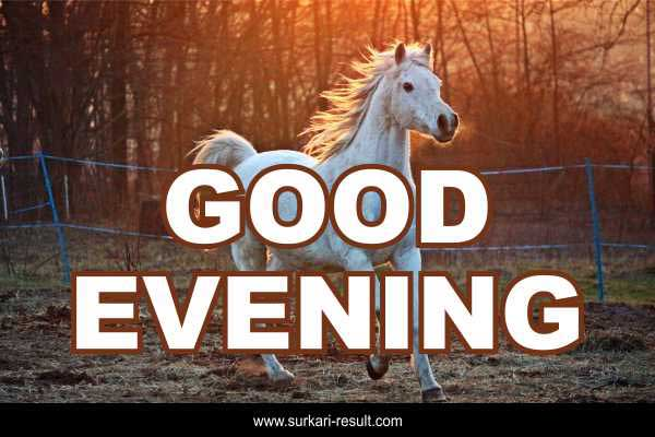 good-evening-image-with-hourse