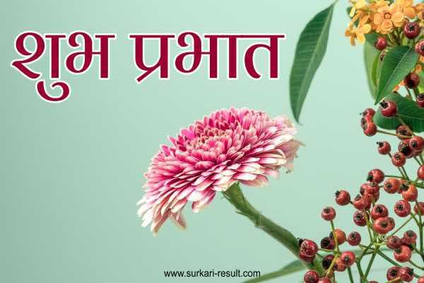 shubh-prabhat-pink-flower