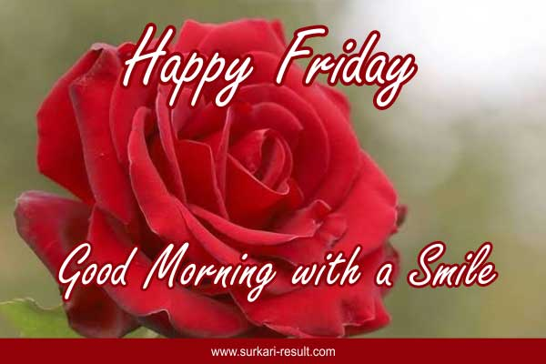 good-morning-red-rose-friday