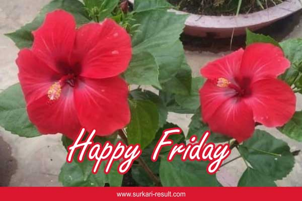 happy-friday-hibuscis-plant