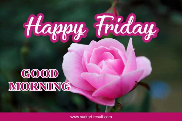 happy-friday-pink-rose-flower