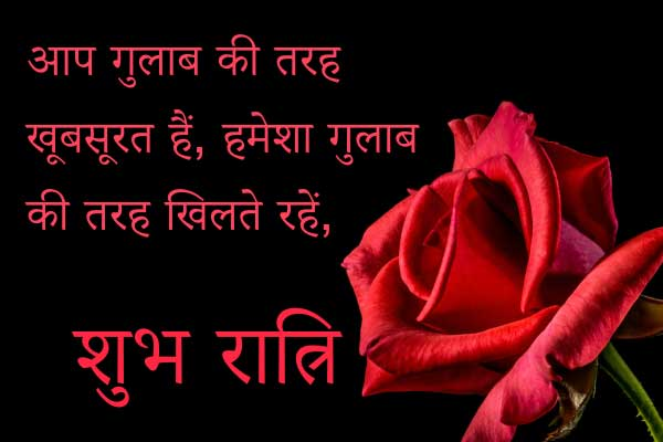 black background with red rose with hindi text about rose