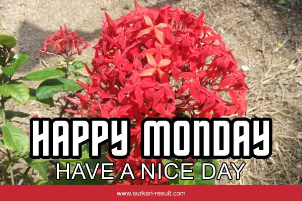happy-monday-img-red-flower