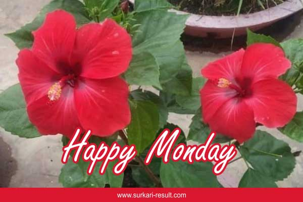 happy-monday-img-red-flowers