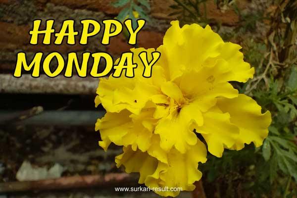 happy-monday-marigold-flower-yel