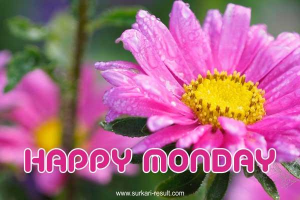happy-monday-pink-flower