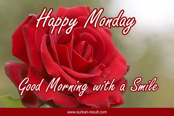 red-rose-monday-images