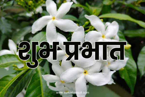 suprabhat-images-white-flowers