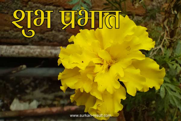 suprabhat-marygold-flower